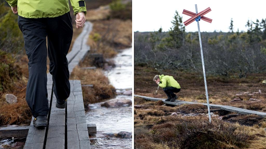 Vandringsleder i de svenska fjällen. Foto: TT