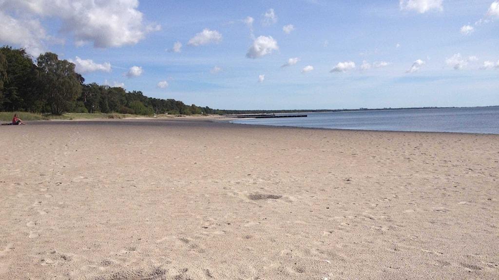 Ystad Strandskog är en av stränderna som har strandfodrats. Foto: Samuel Larsson/Sveriges Radio