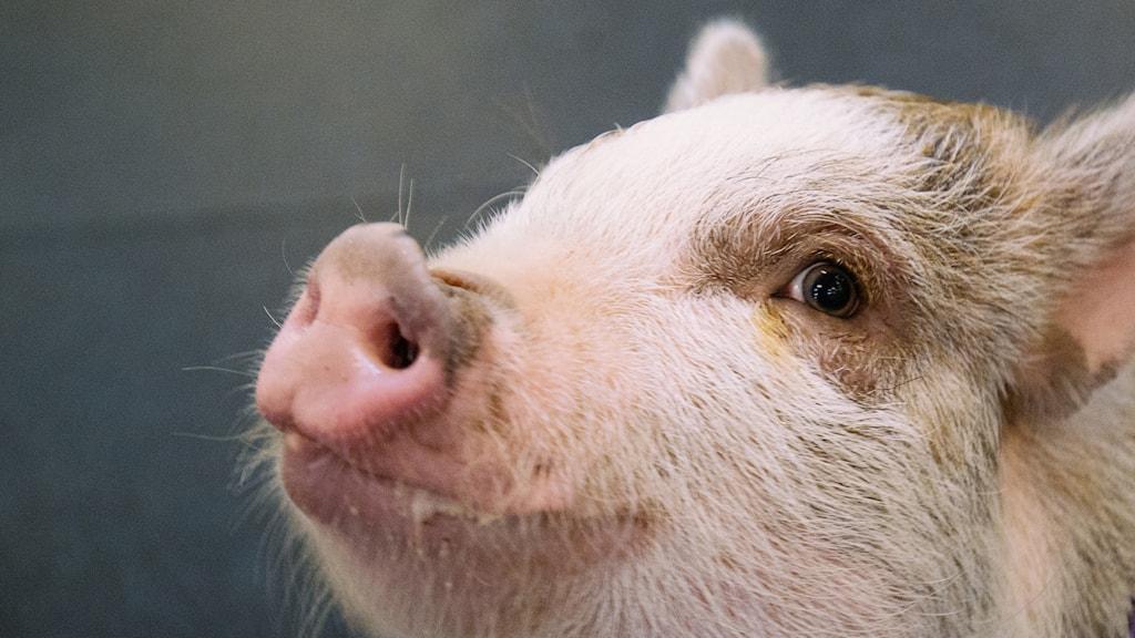 Är människor och djur lika mycket värda?