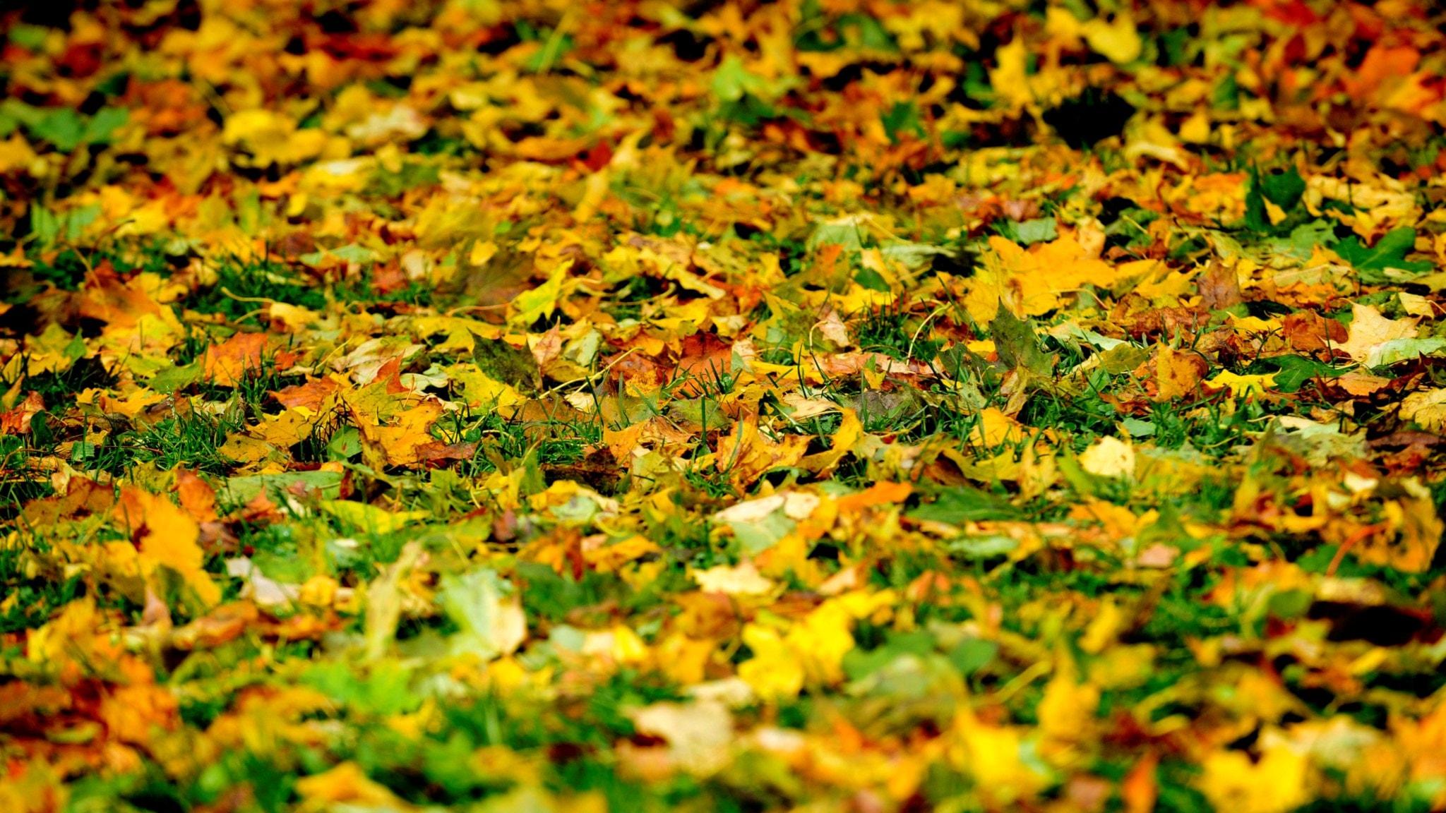 Varför byter bladen namn till löv när de fallit ner på marken?