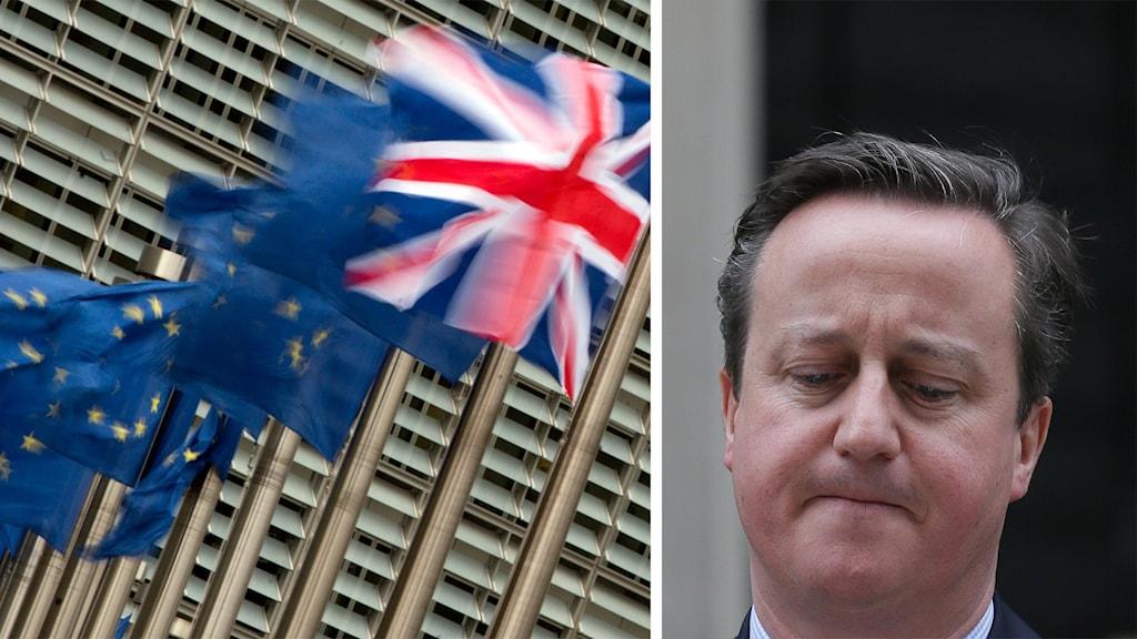 Strobritanniens flagga och EU-flaggor fladdrar i vinden. Storbritanniens premiärminister David Cameron. Foto: Virginia Mayo och Tim Ireland/TT.