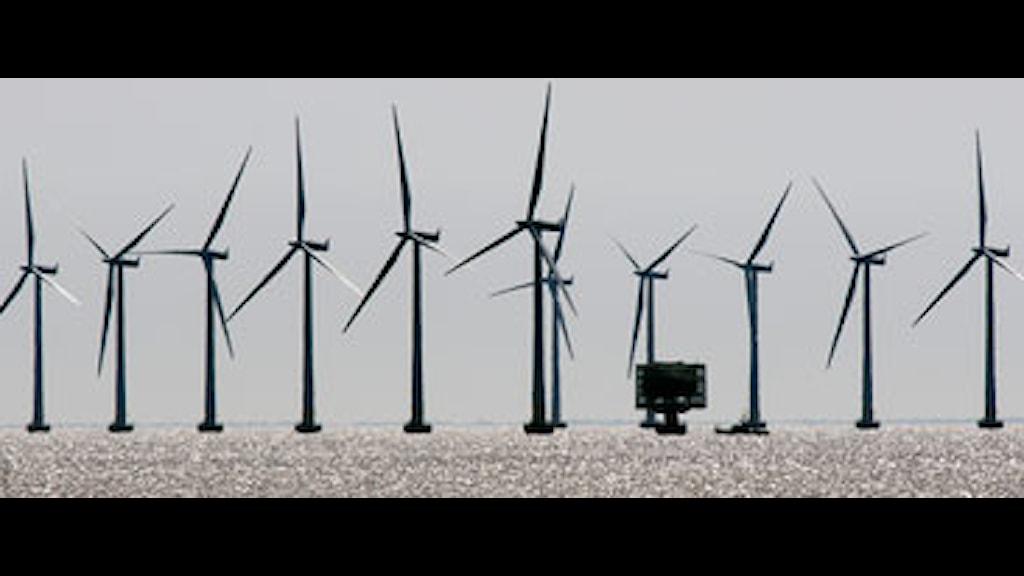 Vindkraftverk till havs. Foto: Johan Nilsson/Scanpix.