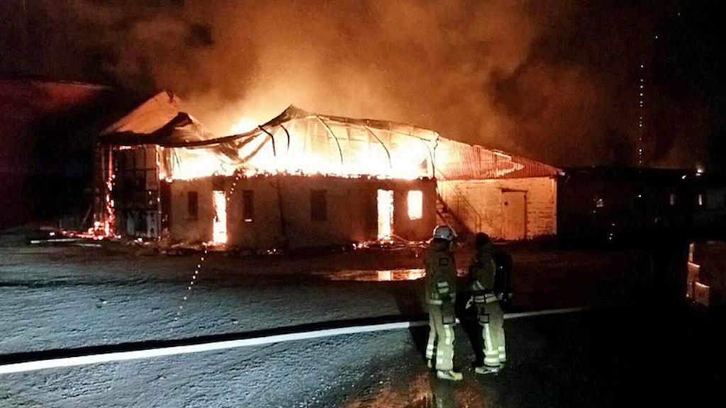 Brinnande ladugårdsbyggnad. Foto: Räddningstjänsten i Säffle